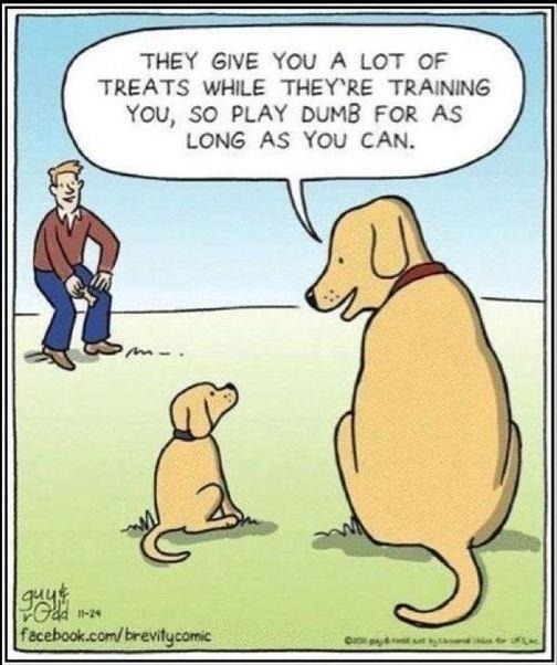 dog humor cartoon