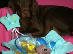DIY puppy gift basket boy puppy