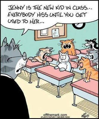 #cat #humor