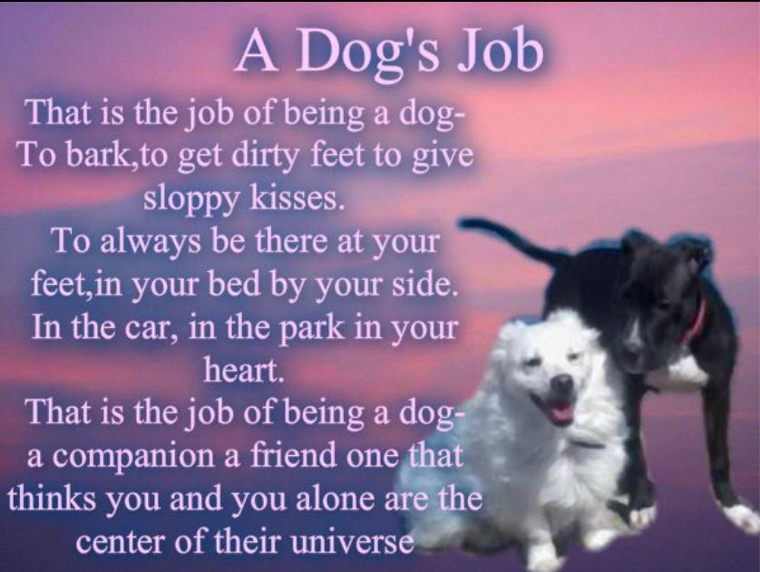 dog quote dog's job