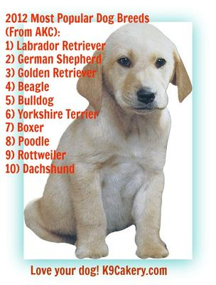 Most Popular Dog Breeds List | Dog Breeds Picture