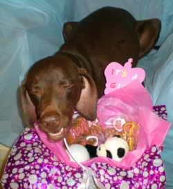 do it yourself puppy dog gift basket