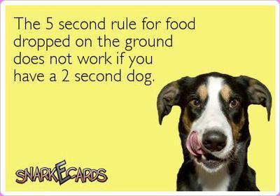 Dog humor