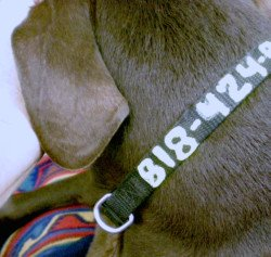 personalized dog colla