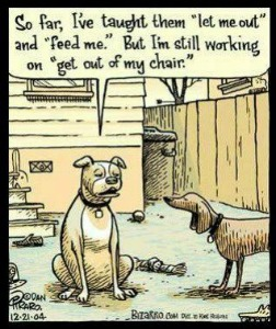This is so my dog!