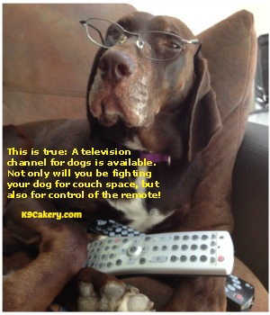 Dog humor about DogTV